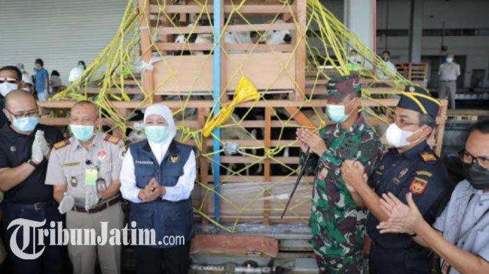 Gubernur Jawa Timur Khofifah Lepas Ekspor 2.650 Ekor Domba Jatim ke Brunei Darussalam
