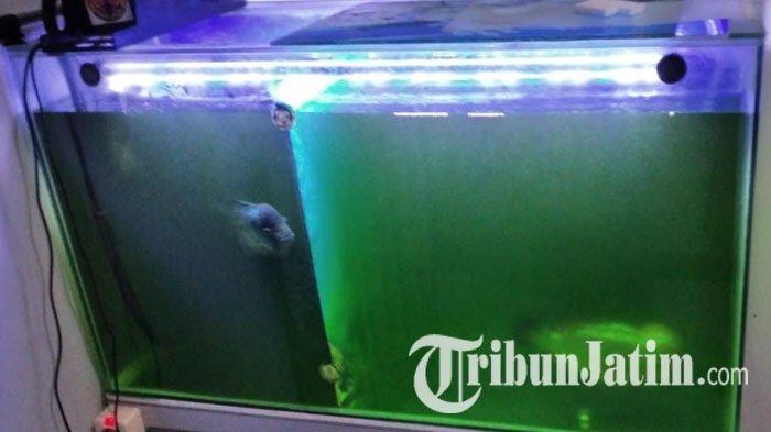 Satu Bulan Air PDAM di PPS 2 Gresik Tidak Mengalir, Aquarium Warga Sampai Air Berubah Jadi Hijau