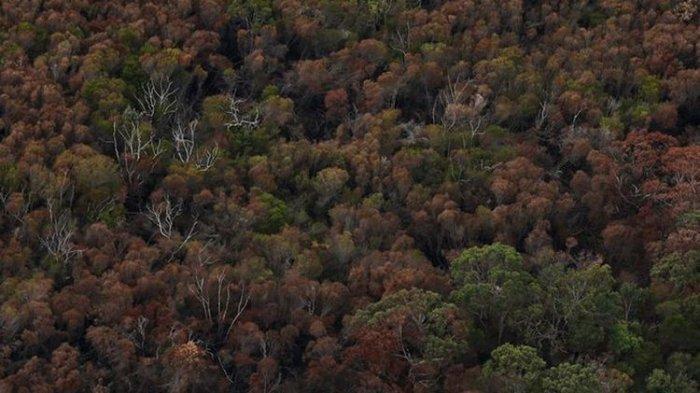Jasad Selebgram Ditemukan di Hutan, sempat Ngilang Pasca Liburan Bareng Pacar, Pesan Terakhir Aneh