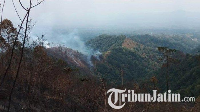 Kebakaran Hutan di Gunung Wilis Makin Meluas dan Merembet ke Wilayah Madiun