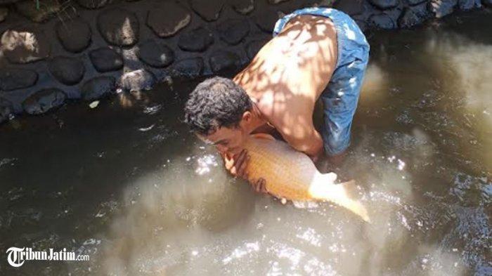 Sungai Jogoyudan Dulu Penuh Sampah Kini Jadi Kolam Budidaya Ikan, Sekali Panen Bisa 4 Kuintal Lebih