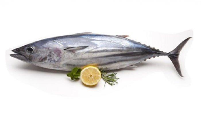 Ilustrasi ikan tongkol