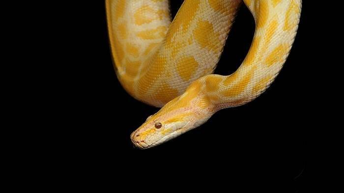 Ilustrasi arti mimpi digigit ular.