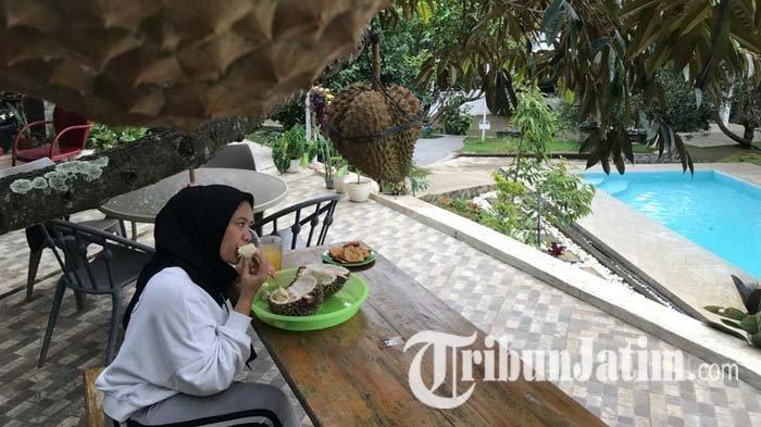 Kebun Durian Kembang Kuning Madiun Tawarkan Kelezatan Durian Langsung dari Pohon Kaki Gunung Wilis