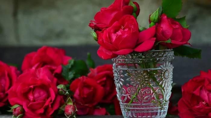Ilustrasi gambar bunga mawar merah.