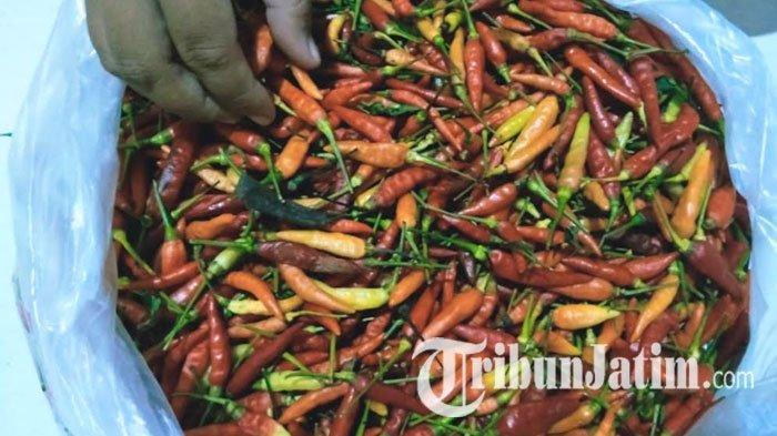 Harga Cabai Bakal Turun Pertengahan Agustus, Pemprov Batasi Pengiriman Cabai Ke Luar Jatim