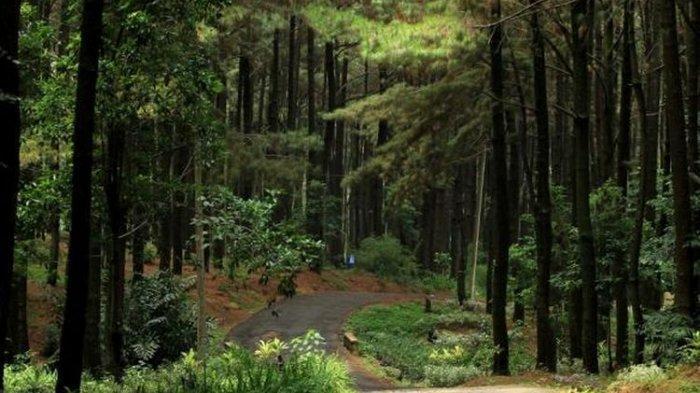 Viral, Foto Gadis Berjilbab Nyaris Bugil di Tengah Hutan Pinus Probolinggo, Diduga Korban Rudapaksa