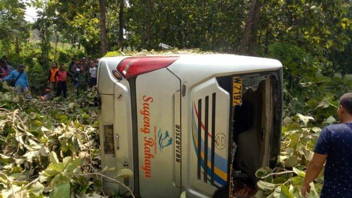 Sopir Kaget Motor Nyelonong ke Badan Jalan, Bus Sugeng Rahayu Tabrak Pohon Hingga Ringsek di Jombang