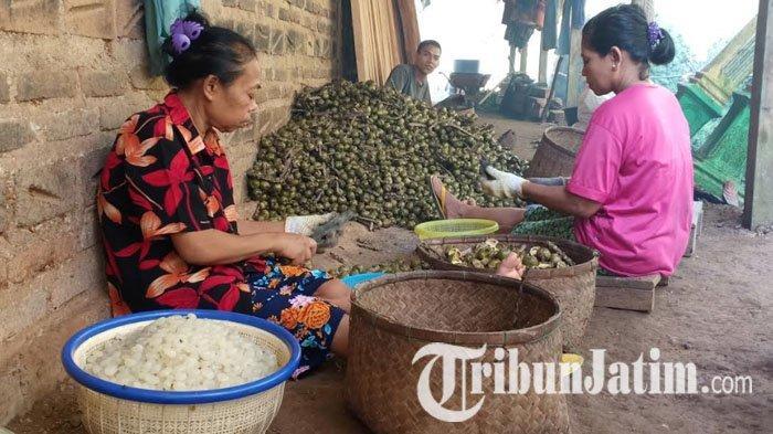 Petani Kolang-kaling di Kabupaten Madiun Ketiban Rezeki di Bulan Ramadhan, Harga Bisa Naik 50 Persen
