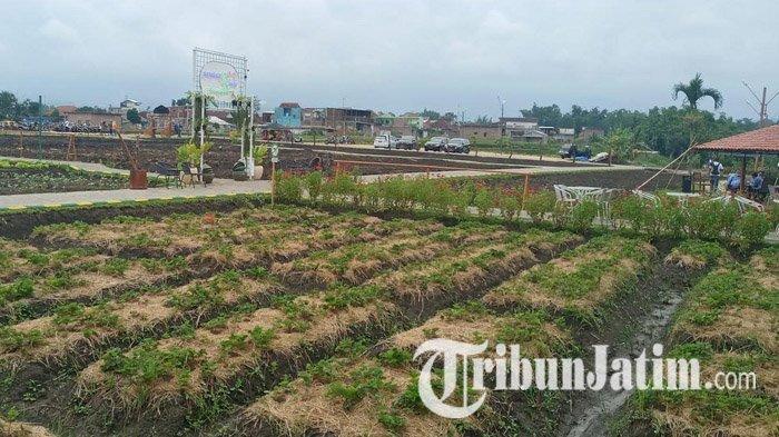 Pemkab Malang Yakin Sektor Agroindustri Akan Tetap Tumbuh di Masa Pandemi Covid-19