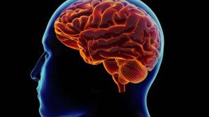 Mempelajari Fungsi Otak Besar dan Bagian-bagiannya Serta Cara Menjaga Kesehatan Otak
