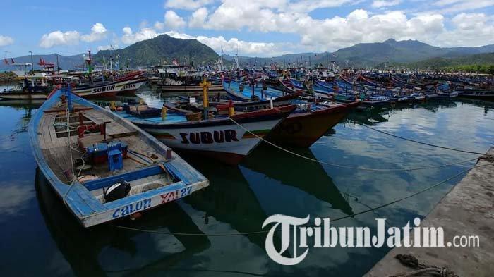 Menteri KKP Larang Ekspor Benih Lobster, Pemkab Trenggalek Berencana Lakukan Budi Daya