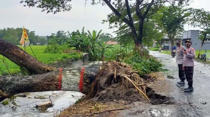 Hujan Deras dan Angin Kencang Terjang Kota Blitar, Belasan Pohon Tumbang Timpa Toko Hingga Musala