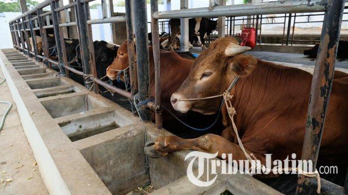 Dewanti Rumpoko Ajak Warga Kota Batu Potong Hewan Kurban di RPH, Pendaftaran dan Pelaksanaan Gratis
