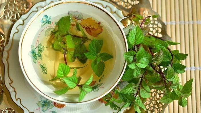Ilustrasi teh hijau dan mint.