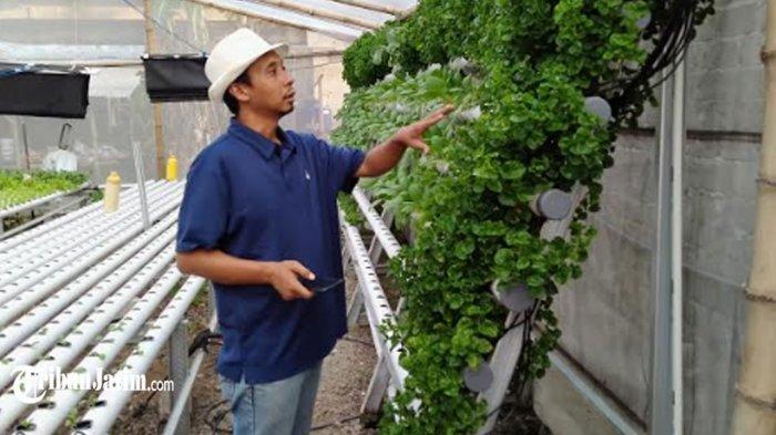Diguncang Pandemi Covid-19, Warga Kota Kediri Sukses Bangun Pertanian Hidroponik di Belakang Rumah
