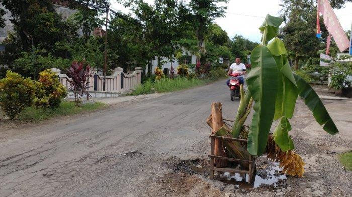 Jalan Berpohon Pisang Jadi Pemandangan Menteri Sosial Risma Saat ke Jember