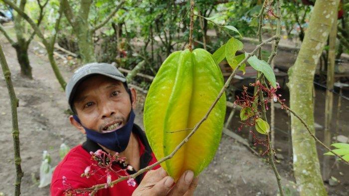 Agrowisata Belimbing Karangsari Kota Blitar Buka Kembali, Petani Berharap Ekonomi Cepat Pulih