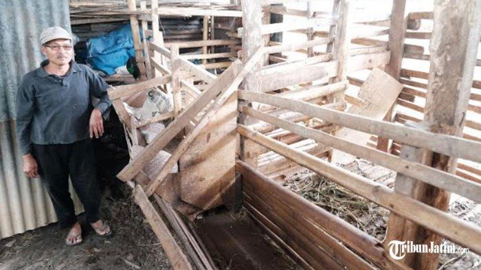 Puluhan Kambing Milik Warga Desa Junrejo Kota Batu Hilang Bertahap, Korban Tidak Hanya Satu Orang
