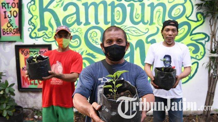 Intip Cara Warga Ngagel Rejo Penuhi Pangan saat Pandemi, Gagas Kampung Sayur, Tanam Tomat-Selada