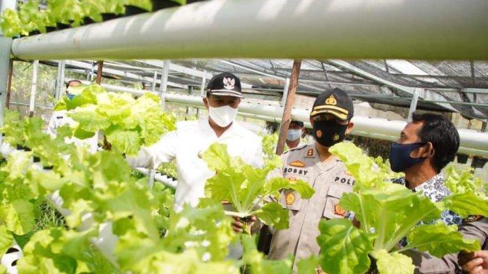 Penuhi Kebutuhan Warga di Tengah Pandemi, Kampung Tangguh di Madiun ini Budidayakan Sayur Hidroponik