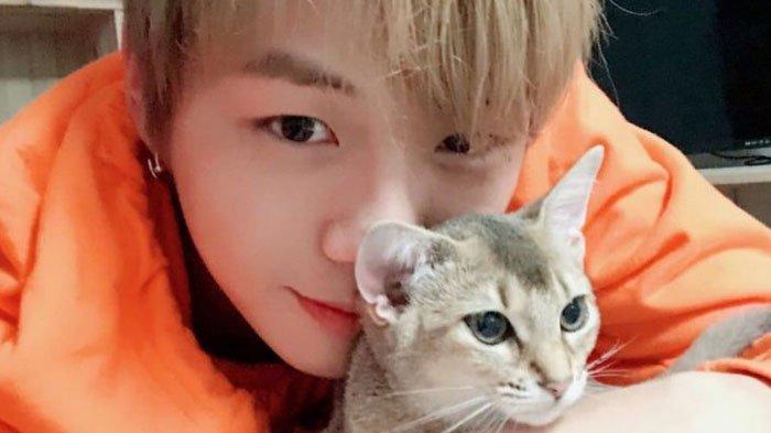 4 Hewan Peliharaan Idol Yang Hampir Seterkenal Pemiliknya Kucing Kang Daniel Hingga Anjing V Bts Halaman All Tribun Jatim
