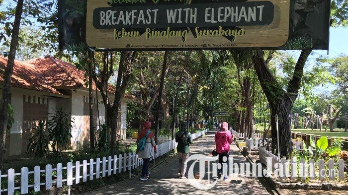 NEWS VIDEO: Situasi KBS Dibuka Seusai Tutup 4 Bulan, Wahana Tunggang Gajah Ditiadakan Sementara