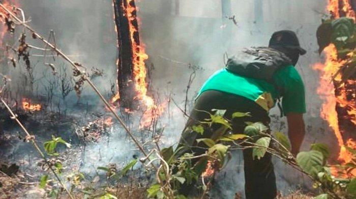 BNPB Janji Kirim Bom Air Atasi Kebakaran Hutan Di Gunung Ijen Sabtu Besok