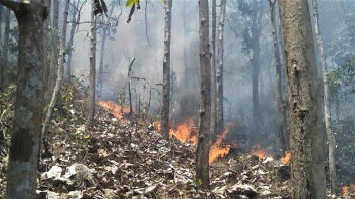 Kasus Kebakaran Hutan di Jawa Timur, Wagub Emil Dardak Sebut Penyebabnya Adalah Ulah Manusia