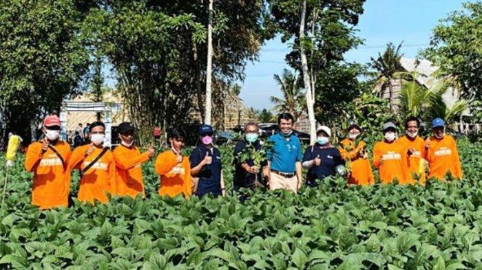Menakar Potensi Apik Ekspor Edamame, Tiga Kementerian Kunjungi Pabrik ANJ di Jember