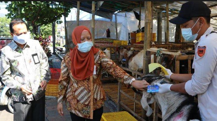 Jelang Idul Adha, Pemkot Batu Periksa Kesehatan Hewan Kurban, Berikut Hasilnya