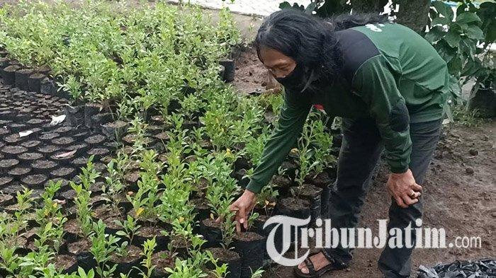 Komunitas Oleng-oleng Kediri Sediakan 30.000 Bibit Tanaman Gratis untuk Jaga Keseimbangan Alam