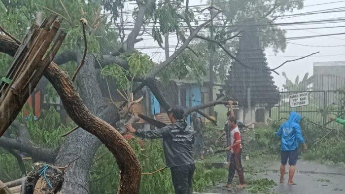 Hujan Deras Landa Surabaya, Pohon Sono Ambruk Tutupi Ruas Jalan Kebraon, Arus Lalin Sempat Macet