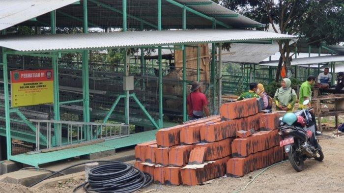 Satpol PP Pasuruan Segel Industri Ternak Tak Berizin di Gerbo