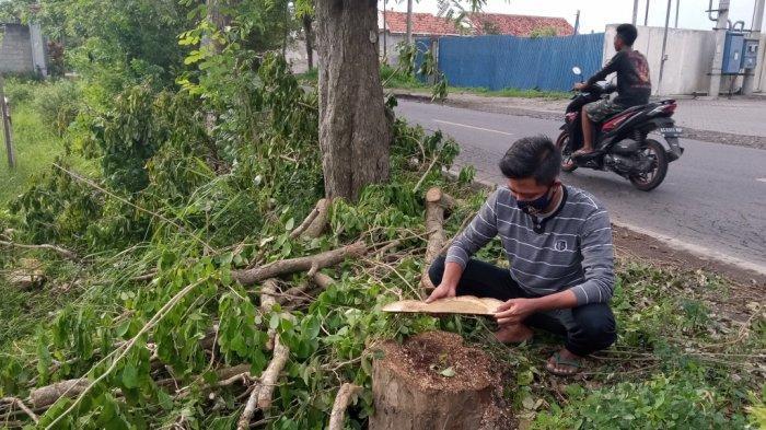 Belasan Pohon Sonokeling di Tulungagung Ditebang, LSM Lingkungan Mengingatkan Kasus Pencurian 2019