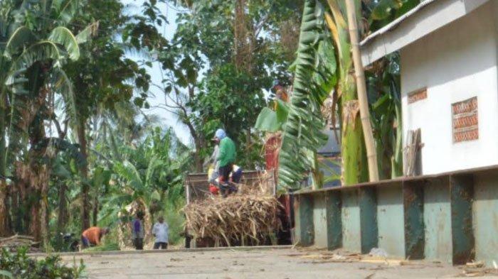 Tak Punya Izin dan Diprotes Warga, Tempat Penimbangan Tebu di Situbondo Ditutup