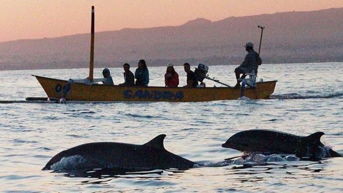 Waktu Terbaik Lihat Lumba-lumba di Pantai Lovina Bali adalah Pagi Hari, Seakan Petak Umpet