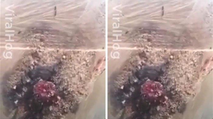 Astaga, Pria Saat Memotong Kayu Tak Sengaja Bunuh Makhluk Ngeri yang Bikin Netizen Ribut Ini