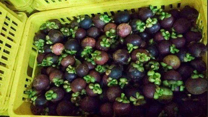 Wabah Virus Corona di Tiongkok Bikin Ekspor Manggis Terhambat, Kementan: Pasar ke AS Jadi Solusi