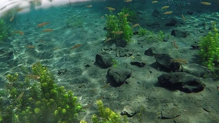 Mata Air Sumber Sirah terletak di Jalan Sunan Gunung Jati RT 05 RW 02, Putuk Utara, Putukrejo, Kecamatan Gondanglegi, Malang.