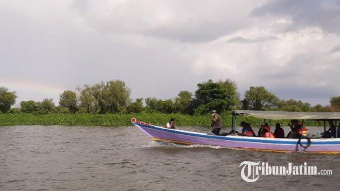 Sensasi Menangkap Ikan Bandeng dan Susur Sungai Muara Bengawan Solo di Wisata Hutan Mangrove Gresik
