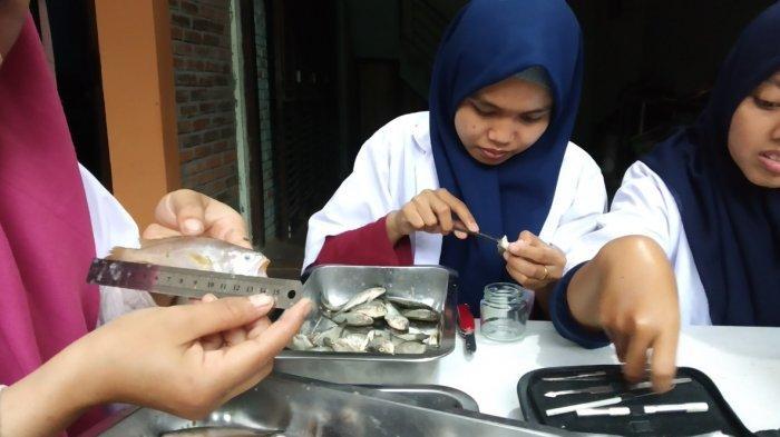 Tim Peneliti Gresik Temukan Kandungan Mikroplastik Dalam Ikan Muara Sungai Tambak Wedi Surabaya