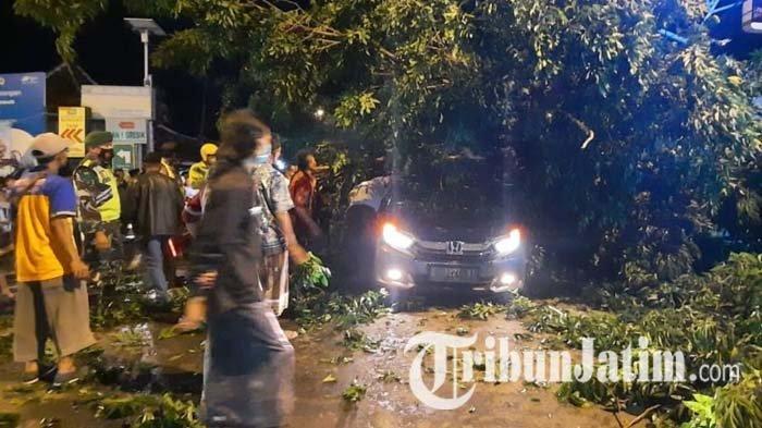 Digasak Truk Kontainer Bermuatan Pupuk, Pohon Tumbang dan Timpa Mobil di Bungah Gresik