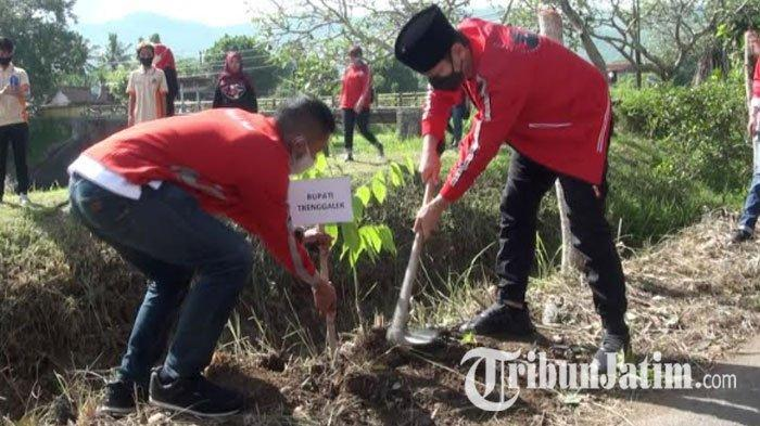 PDI Perjuangan Trenggalek Tanam Pohon di Bantaran Sungai, Pantik Jiwa Peduli Lingkungan di HUT Ke-48