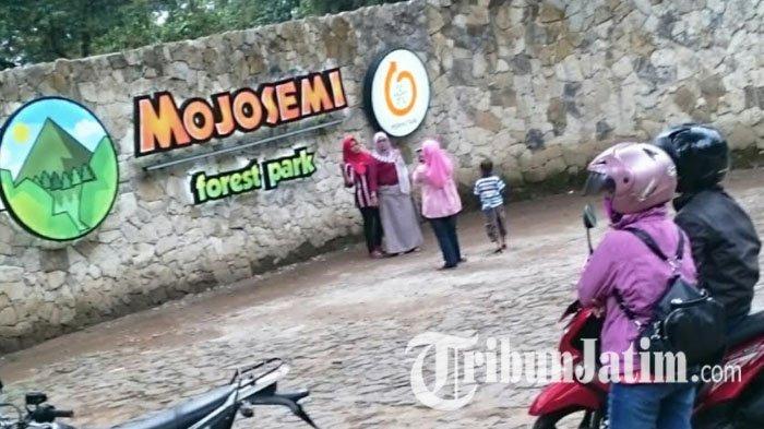 Belum Berizin, Mojosemi Forest Park Sarangan Sudah Beroperasi, PT Perhutani Dilaporkan Jokowi