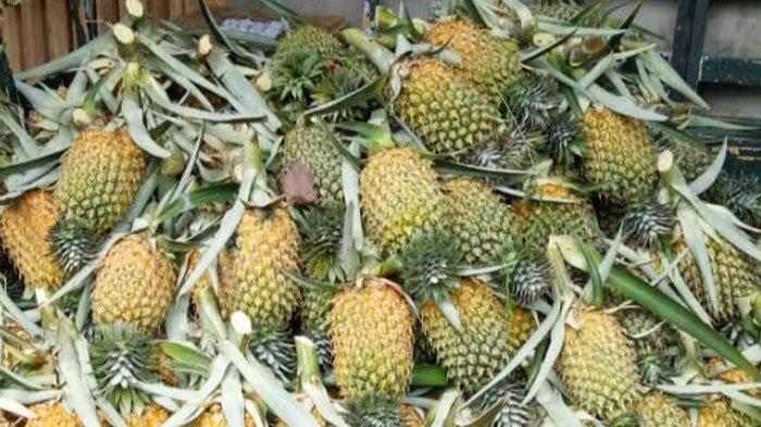 ILUSTRASI Buah nanas untuk program menu diet nanas.