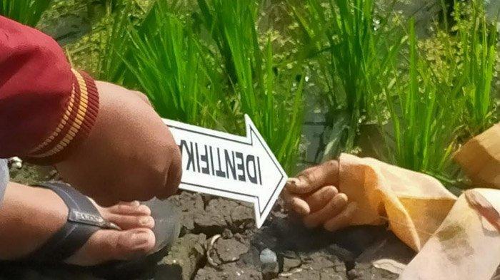 Nenek di Tuban Ditemukan Tergeletak Tak Bernyawa di Pematang Sawah, Tersetrum Listrik Jebakan Tikus