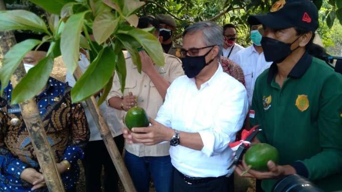 OJK Memonitor Penyaluran KUR Klaster Pertanian Alpukat Pameling di Kabupaten Malang