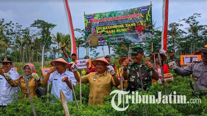 Seusai Resmikan Embung, Bupati Blitar Rijanto Ikut Panen Raya Cabai Keriting di Desa Kaligambir