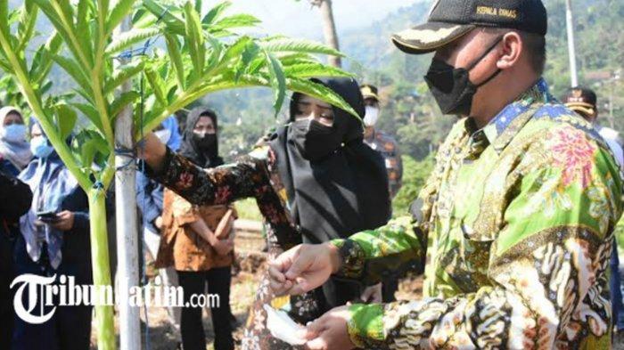 Bupati Mojokerto Ikfina Fahmawati Tinjau Panen Raya Porang 15 Ton di Kecamatan Jatirejo